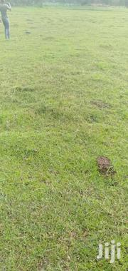 One Acre In Chwele Bungoma | Land & Plots For Sale for sale in Bungoma, Kabuchai/Chwele