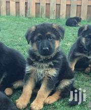 German Shepherd Puppies | Dogs & Puppies for sale in Nairobi, Nairobi Central