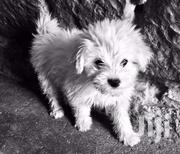 Terrier Pup | Dogs & Puppies for sale in Nairobi, Embakasi