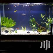 Cool Fish Tank | Pet's Accessories for sale in Nairobi, Nyayo Highrise
