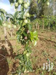 Purple Passion | Meals & Drinks for sale in Uasin Gishu, Tapsagoi