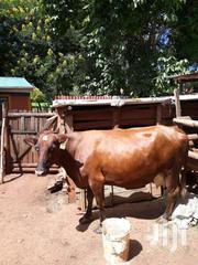 Dairy Cow On Sell   Livestock & Poultry for sale in Trans-Nzoia, Sitatunga