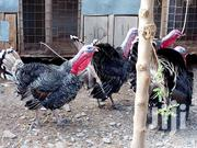 Mature Male Turkey's (Toms) | Livestock & Poultry for sale in Nairobi, Ruai