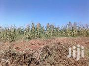 1acre On Sell Mumias Buchifi | Land & Plots For Sale for sale in Kakamega, Mumias Central