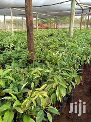 Land For Sale | Land & Plots For Sale for sale in Nairobi, Embakasi