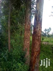 Land Four Sell In Webuye, 1heka Na Kwota | Land & Plots For Sale for sale in Bungoma, West Bukusu