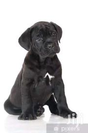 The Noble Veterinary Surgeons   Dogs & Puppies for sale in Nairobi, Karen