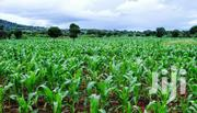 2 Acres Agricultural Land for Sale | Land & Plots For Sale for sale in Meru, Mitunguu