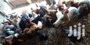 Am Selling Kienyeji Kuku | Livestock & Poultry for sale in Mombasa, Kadzandani