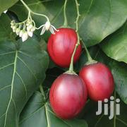 Tree Tomato Seedlings | Meals & Drinks for sale in Kiambu, Hospital (Thika)