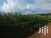 100x100 Plot On Sale In Rongo,Kangeso Area.   Land & Plots For Sale for sale in Migori, East Kamagambo