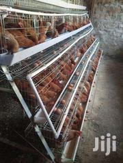 LAYERS FOR SALE | Livestock & Poultry for sale in Nairobi, Kasarani